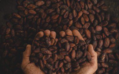 Vers une prochaine hausse des cours du cacao ?